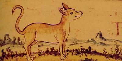 perros antiguos extintos razas