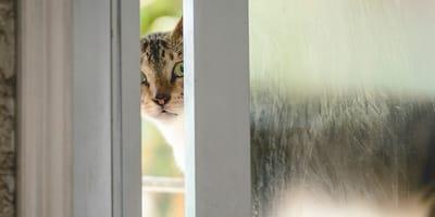 gato asomado en una ventana