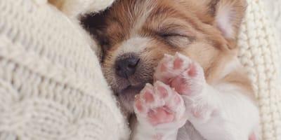 cuidados de perros recien nacidos