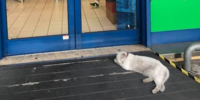 Katze Chicca vor dem Supermarkt.