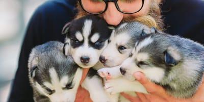 Co trzeba wiedzieć  i co sprawdzić wybierając hodowlę psów?