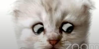 """""""Wysoki sądzie, ale ja naprawdę nie jestem kotem!"""" Adwokat ma problem z filtrem na Zoomie, a nagranie podbija sieć"""
