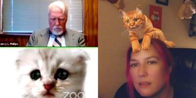 Cómo usar las filtros de gato y otros animales en videollamadas Zoom