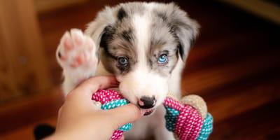 Ecco come educare un cucciolo a non mordere