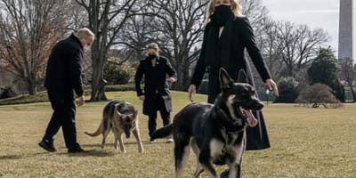 Dr Jill Biden has one strict rule for White House dogs Champ and Major