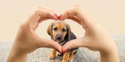 ¿Se puede querer a un perro más que un persona?