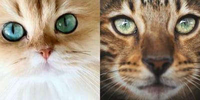 Gatti più belli dei social: le foto che tolgono il fiato!