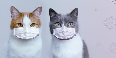 Síntomas del coronavirus en gatos: cómo reconocerlos y cómo actuar