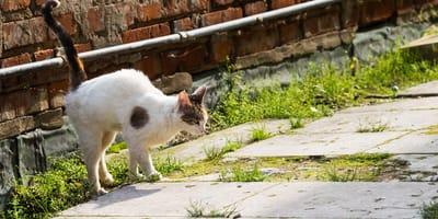 Katze markiert: Alles über Duftmarken und ihre Bedeutung