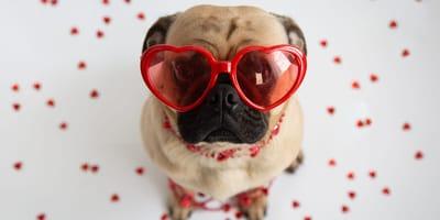 Planujesz spędzić Walentynki ze swoim pupilem? Poznaj nasze pomysły na wspólne spędzenie czasu!