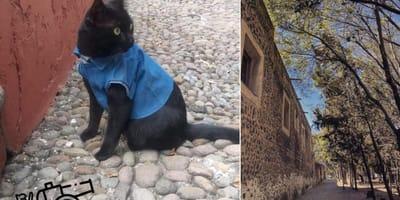 Museo de las Intervenciones contrata a Fray Michi de Cervantes, una estrella de Instagram