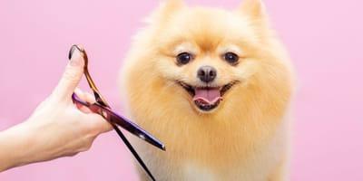 Ein Hund beim Frisör.