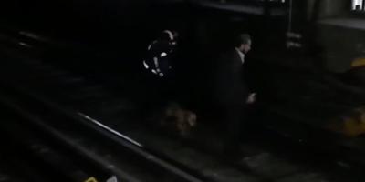 perro rescatado en las vías del metro