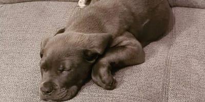 Hundewelpe Benny ist tot: Sein Schicksal wird noch so viele andere ereilen