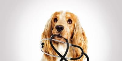 I cani dottori esistono! Ecco i medical detector (Intervista)