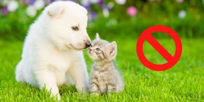 Haustier-Kauf im Internet: Erstes Land zieht die Notbremse!