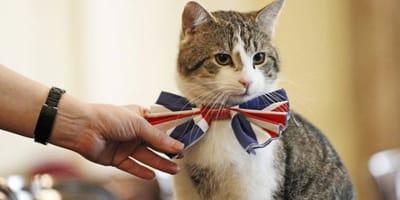 Larry, il gatto di Downing Street, festeggia 10 anni come Chief Mouser