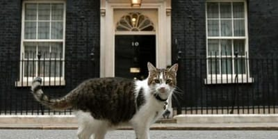 Larry the cat outside No. 10 DOwning Street