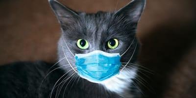 Fataler Fehler bei Covid-19: Katzenhalter dürfen diesen Fehler nie begehen