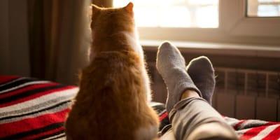Cosa significa quando un gatto ti dà le spalle?