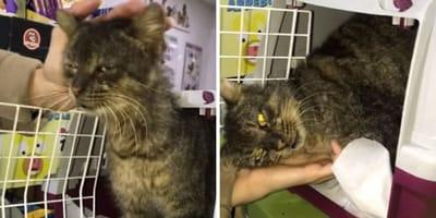 rescate ronnie gato callejero ceuta
