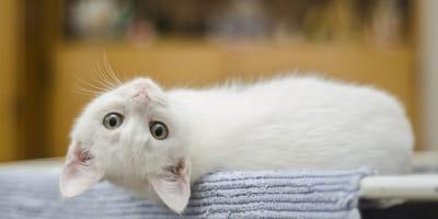 Se avecina campaña de esterilización de gatos en México