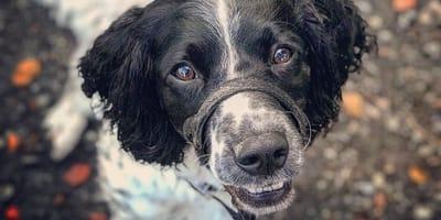 """""""Sind in Panik verfallen"""": Familie kommt nach Hause und findet Hund blutüberströmt"""