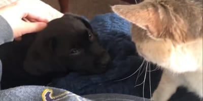 Cuando su gato por fin acepta al nuevo miembro de la familia sucede algo maravilloso (Vídeo)