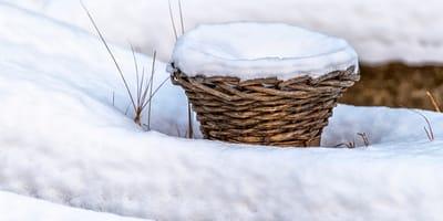 Passante trova un cesto abbandonato tra la neve. Purtroppo non è vuoto