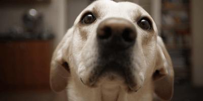 Ecco come il tuo animale vede la casa:  non è ciò che ci si aspetta!