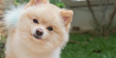 40 nomi per cani piccoli carini come loro!