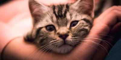 Światowy Dzień Kota - ile jest bezdomnych kotów w Polsce i jak im pomóc?