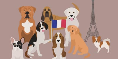Enchanté: Französische Hunderassen im Überblick