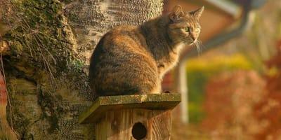 Perché i gatti fissano il vuoto?