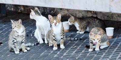 colonia gatos callejeros