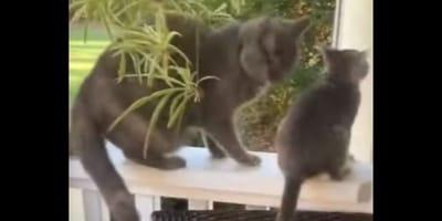 Gattina vuole giocare, la sorella maggiore non ci sta (Video)