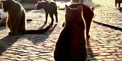 Festa nazionale del gatto: gli eventi del 2021