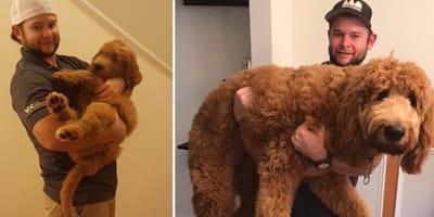 Przed i po: 10 transformacji słodkich szczeniaczków w olbrzymy!