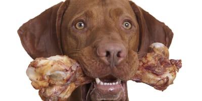perro comiendo hueso