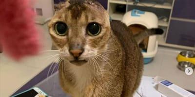 Kociak stracił uszy, ale zyskał coś znacznie ważniejszego – ta historia wzruszy Was do łez!