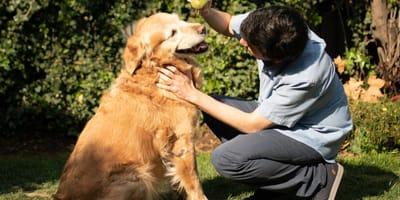 perro golden retriever jugando con su dueño