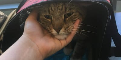 Kobieta ratuje ciężarną kotkę, ale nie wie, jak bardzo się myli!