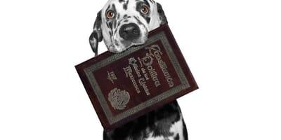 derechos de los animales constitucion