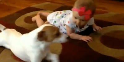 Mała dziewczynka uczy się raczkować, a pies postanawia jej towarzyszyć i... raczkuje razem z nią