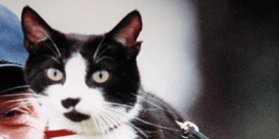 Día del Gato 2021: quién es Calcetines y por qué se celebra ese día en su honor