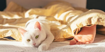 Why do cats sleep at the foot of the bed?