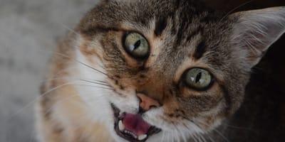 Zobacz, jak ten kot robi wszystko, by ocalić opiekunkę przed... kąpielą! (VIDEO)