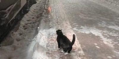 Gato llega a la estación al 20 para las 10 todos los días por la razón más dulce