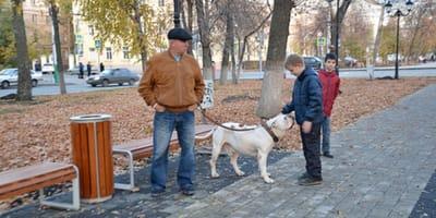 American bulldog con persone al parco