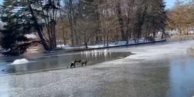 ragazzo-e-cane-su-lago-ghiacciato